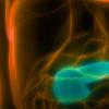胰腺癌治疗成功靶向细胞周期