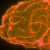阿尔茨海默氏症的3D模型显示了血脑屏障在疾病进展中的作用