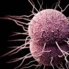 镀锌的研究人员发现阻止锌的摄取可以预防淋病