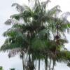 科学家在亚马逊Acai浆果中发现抗疟化合物