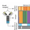 使用抗原受体条形码追踪器鉴定的抗癌免疫细胞