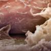 从非编码基因组区域表达的分子与肿瘤增殖有关