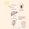 摄入过多的维生素D会导致肾功能衰竭