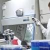 Amicus,赛默飞世尔的Brammer生物技术合作伙伴 致力于基因治疗的生产