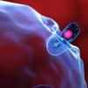 新近确定的食欲控制神经回路对食品气味的反应