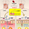 富含浆果和石榴的饮食中的微生物代谢物可预防炎症性肠病