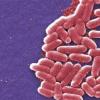 元基因组学揭示了儿童腹泻病病例的未知数