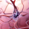 新型化合物在动物研究中预防神经退行性变