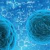 实验疫苗具有抗多种HIV菌株的潜力