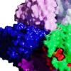 研究人员将细菌马达可视化为人类产生的电能的第一步