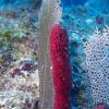 科学家首先在海洋海绵中开发快速细胞分裂