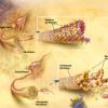 脑胆固醇可能在阿尔茨海默氏病的发病中起重要作用