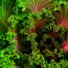 源自蔬菜的化合物可能对抗认知老化