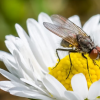 抑制常见酶可将苍蝇和蠕虫的寿命延长10%