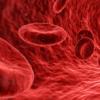 研究人员找到再生血管的关键