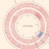 新研究强调抗生素如何刺激细菌繁殖