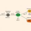 科学家利用人类多能干细胞再生心外膜