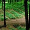 林场可以为人参和其他草药创造市场