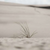 干旱影响研究显示了植物和二氧化碳的新问题