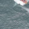 研究人员报告首次记录了蓝鲸的心率