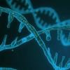 癌细胞中发现的环状DNA支持其生存和抵抗力