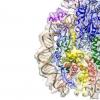 科学家现在知道DNA的分子伴侣是什么样子