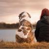 得益于抗生素法规 抗菌药物现在在芬兰对犬类细菌更有效