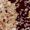 一项新研究揭示了鲜为人知的DNA修复蛋白的多种作用