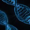 组装最完整的商业甘蔗基因组序列