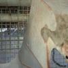 粪便颗粒和食物残渣揭示了皮尔巴拉的蝙蝠吃什么