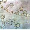 研究人员发现新的证据表明很难找到真菌