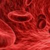 高血脂水平如何引起炎症并损害肾脏和血管