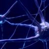关于大脑如何产生认知的关键谜团终于被理解