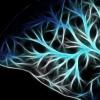 痴呆症研究揭示蛋白质如何相互作用以阻止大脑信号