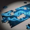 遗传变异主要存在于与心力衰竭有关的非洲人后裔