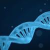 所谓的垃圾DNA隐藏有用的化合物