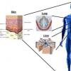 研究人员认为生物打印多细胞组织的复杂性