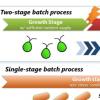 成功代谢海藻以合成有价值的抗氧化剂虾青素