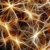 新方法可以帮助研究人员观察神经元的计算