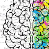 放大大脑回路可使研究人员停止癫痫发作活动
