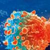 核转运蛋白中发现的可能的癌症治疗策略