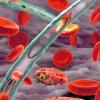 研究人员阻止疟原虫传播感染的能力