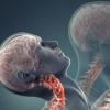 改良中风药可促进脊髓损伤大鼠的损伤修复