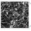 研究人员观察纳米装置中类似大脑的行为