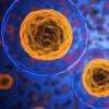当细胞快速循环时 癌症便会迅速起步