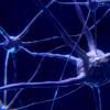 新型凝胶可提高受损脑组织中的细胞存活率