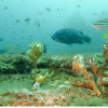 悉尼的海水淡化排放可在气候不确定时延长鱼类的寿命