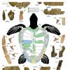 新的海龟属和物种揭示了其近代亲属的进化