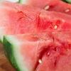 西瓜补品为肥胖小鼠带来健康益处