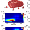 荧光光谱法有助于评估肉质